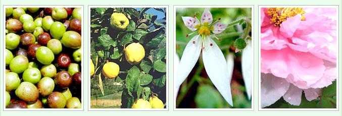 オリーブスクワランと、11種類の植物エキス配合
